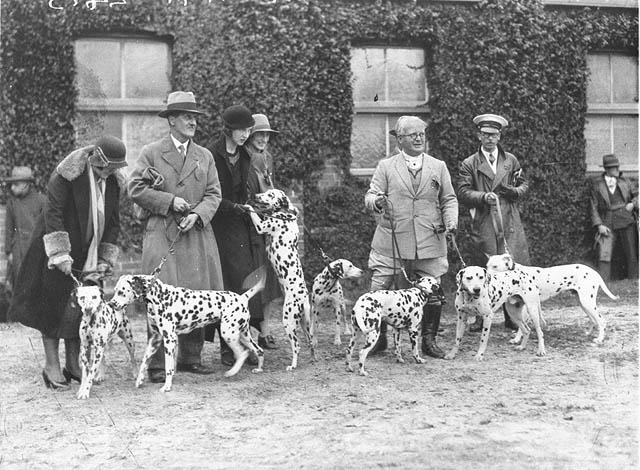 Dalmatians in 1925