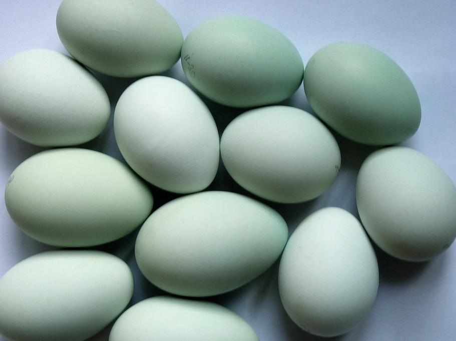 Green eggs , not Easter eggs