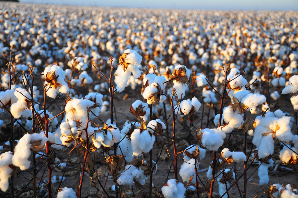 Child labour in the cotton industry: what you can do -